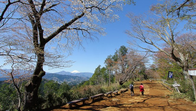 go on a leisurely hike up mount takao