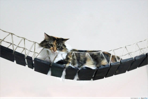 cat on swing bridge
