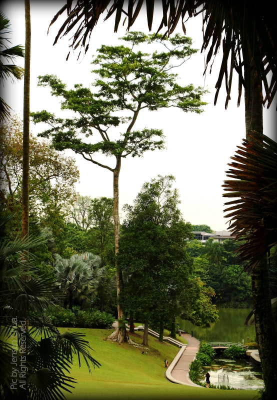Singapore Botanic Gardens Photo Journal