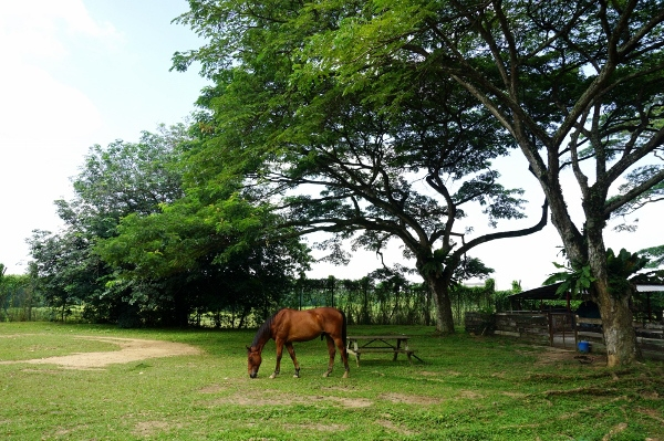 10 Hidden Farms in Singapore You Never Knew Existed