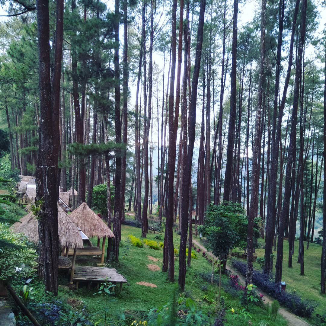 nongko ijo pine forest in Indonesia