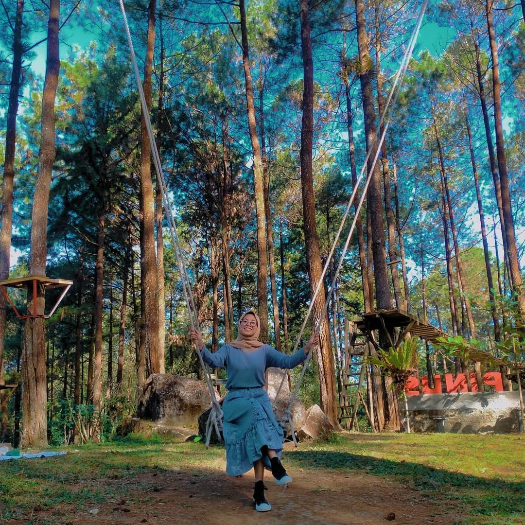 kalilo pine forest in Indonesia