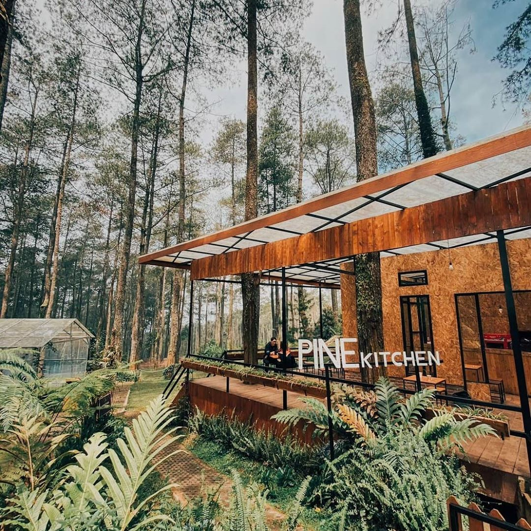 cafe orchid forest cikole