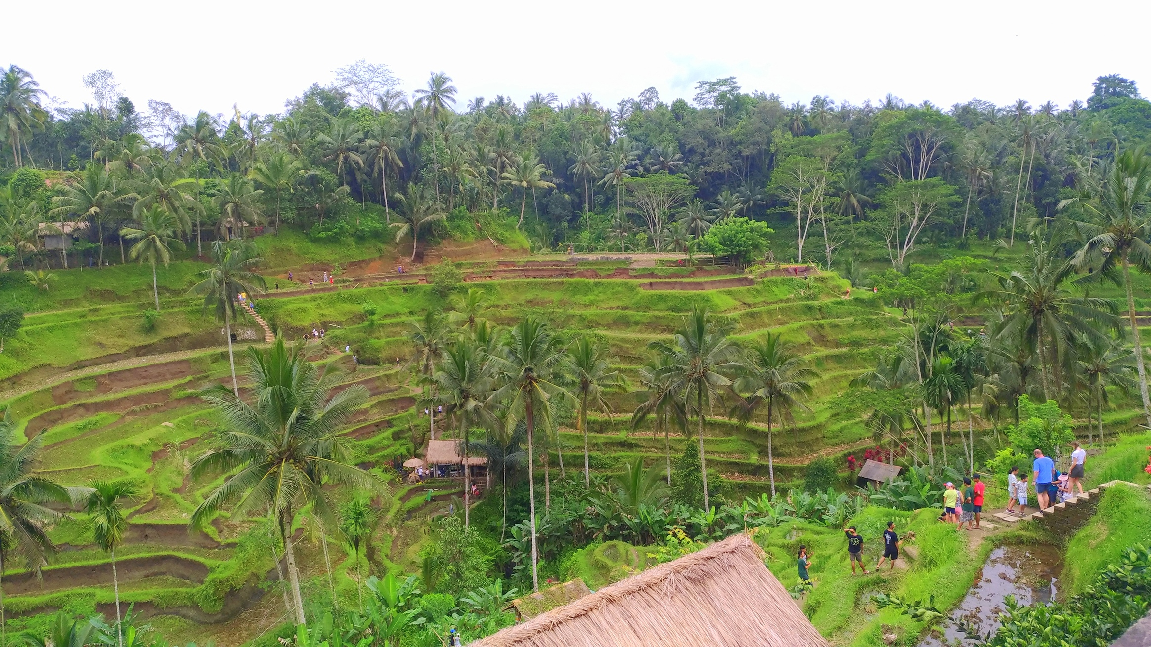 8 easy hiking trails indonesia - tegallalang rice terrace