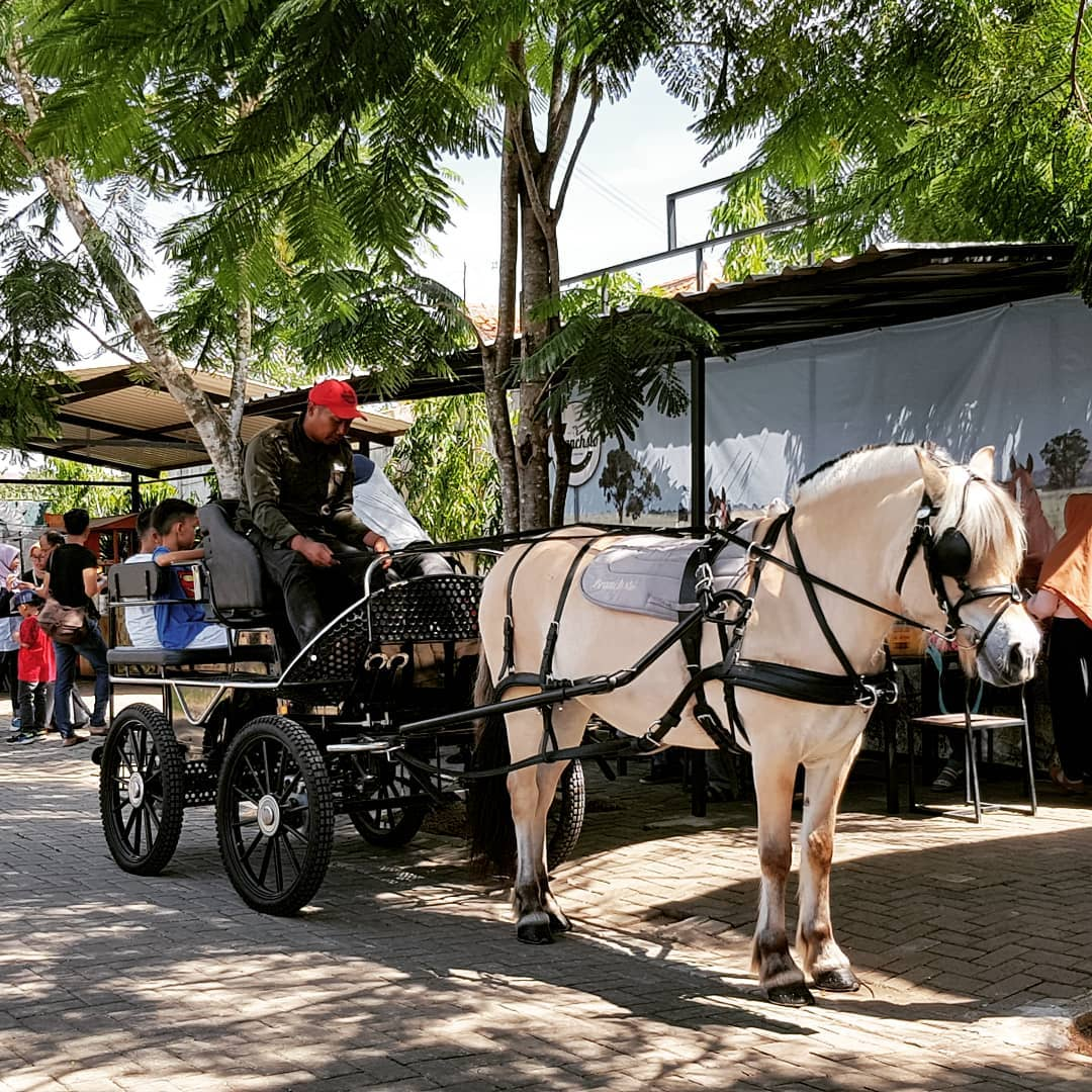 carriage riding at branchsto equestrian park