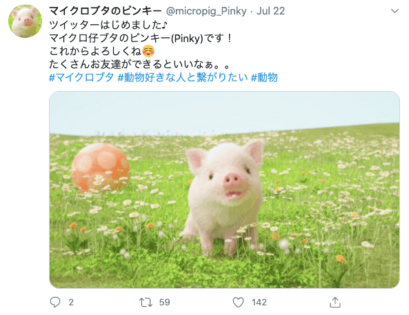 Pig balancing on ball in Japan - micropig_pinky's first tweet