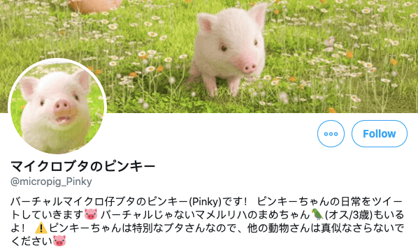 Pig balancing on ball in Japan - updated bio