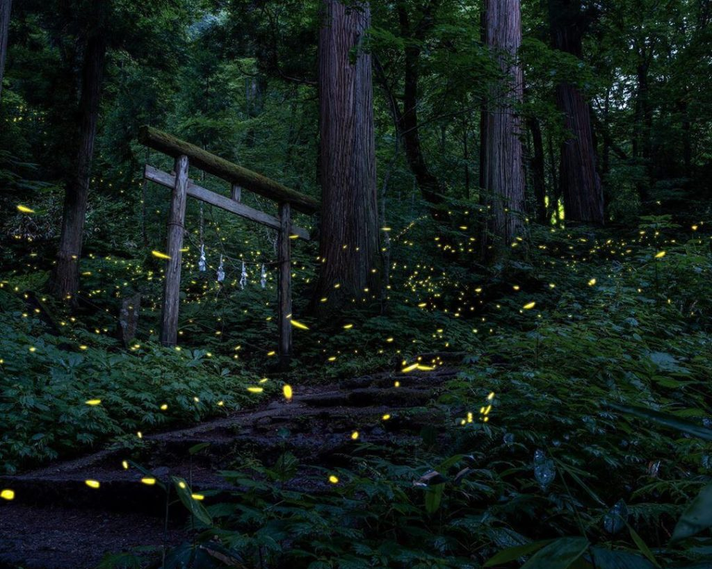 Things to do in Japan in summer - fireflies in japan