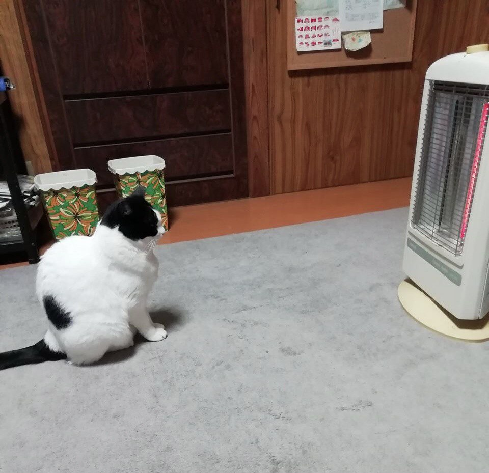 Japanese cat waits for owner - cat staring at heater