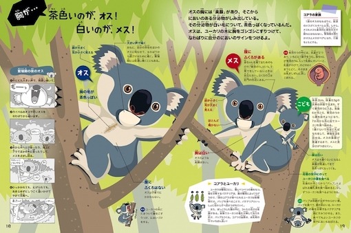 animal picture book breastfeeding - koala