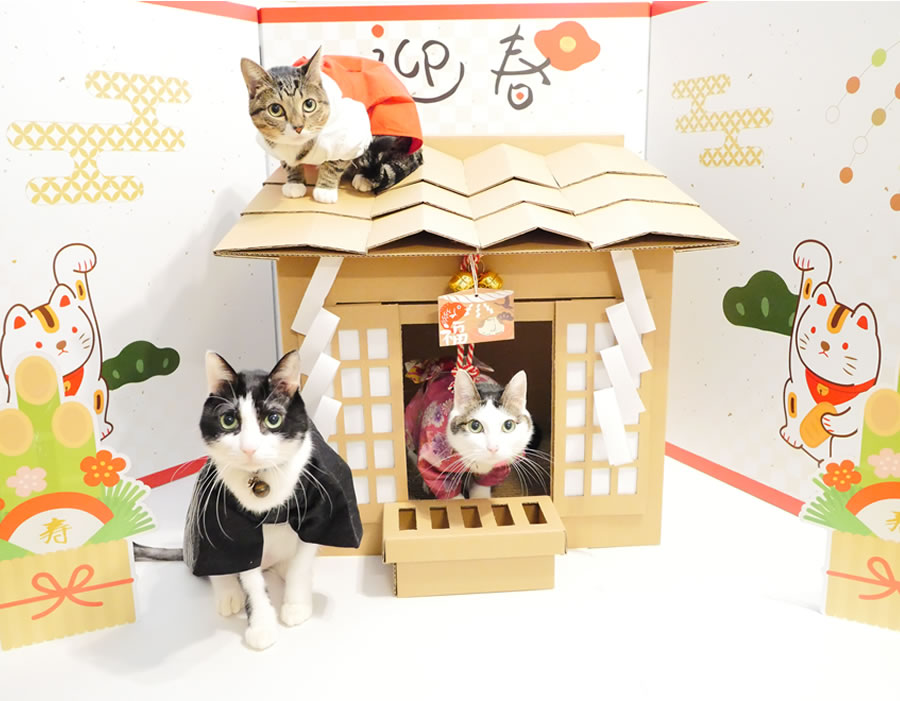 cardboard cat shrine - folding screen with cats