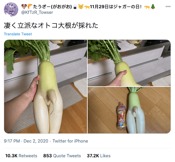 Japanese finds r-rated daikon - twitter post of daikon with offending appendage