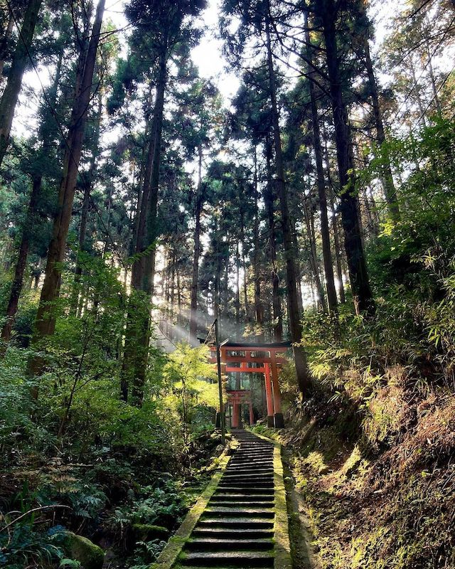 Unique Japanese words - torii gate in forest