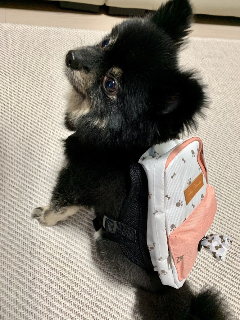 Daiso Dog Clothes - Backpack