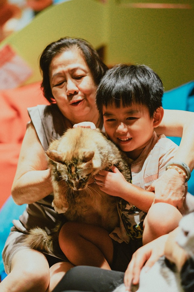 M Sia S 1st Cat Playground In Sunway Putra Mall Is Perfect For Those In Need Of Feline Therapy Thesmartlocal Malaysia Travel Lifestyle Culture Language Guide