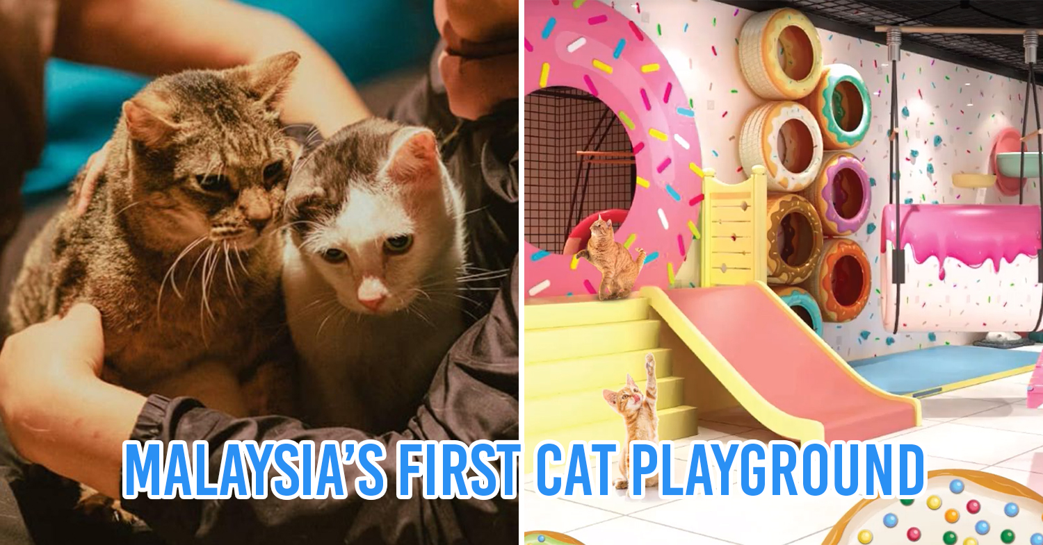 CAT Playground Cover Pic
