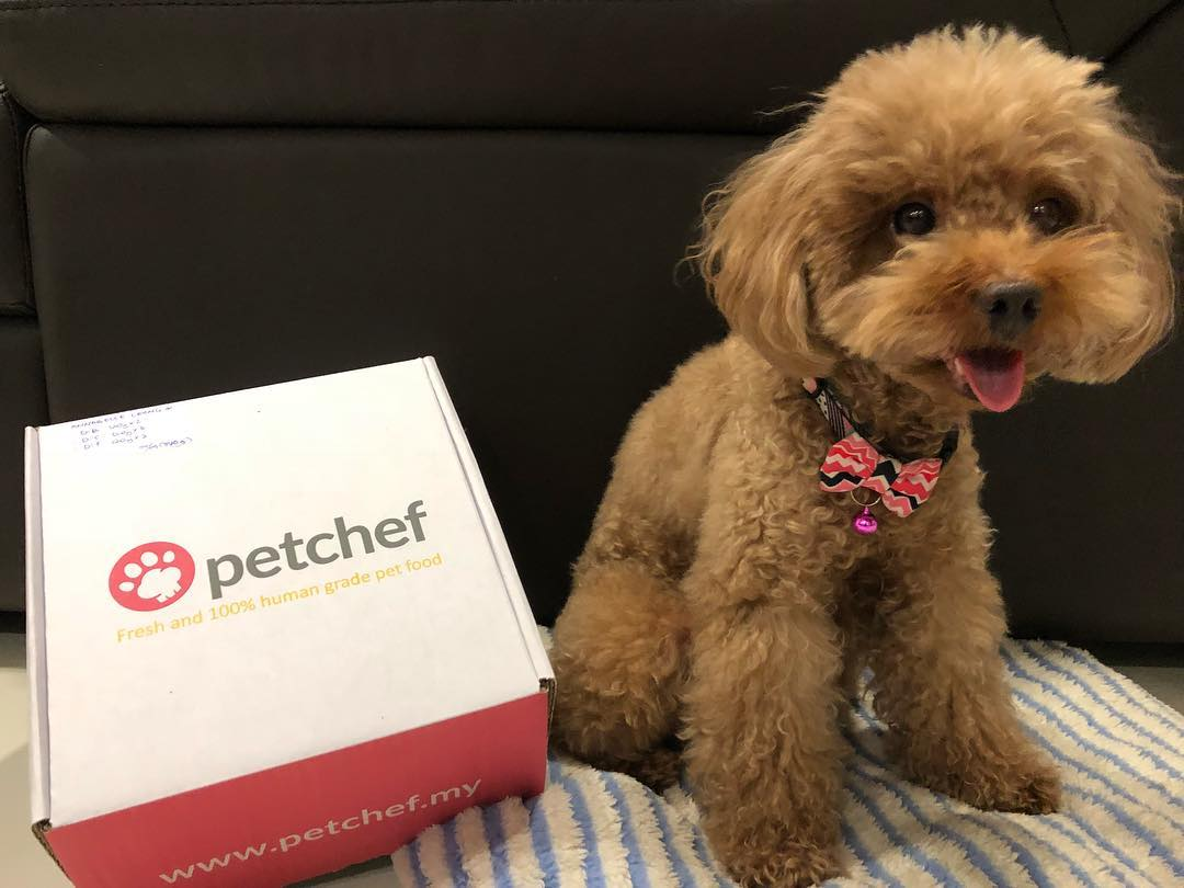 dog posing with petchef delivery