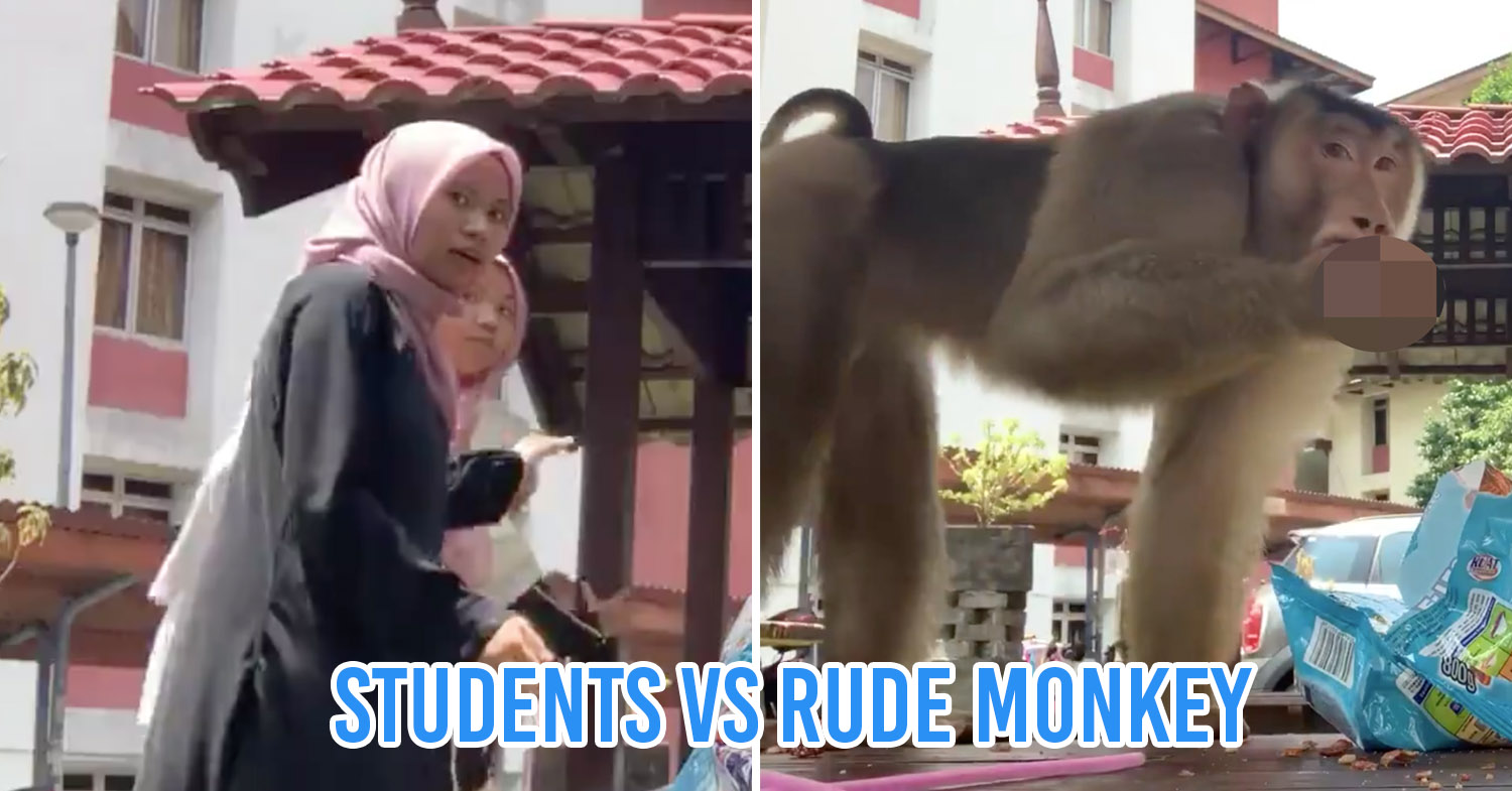 Malaysian monkey viral video