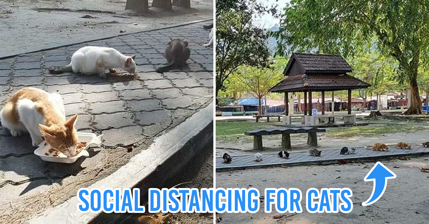 Cats social distancing cover pic
