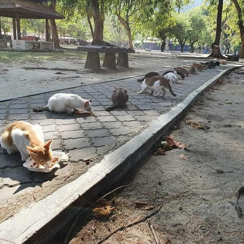 Cats eating on the pavement
