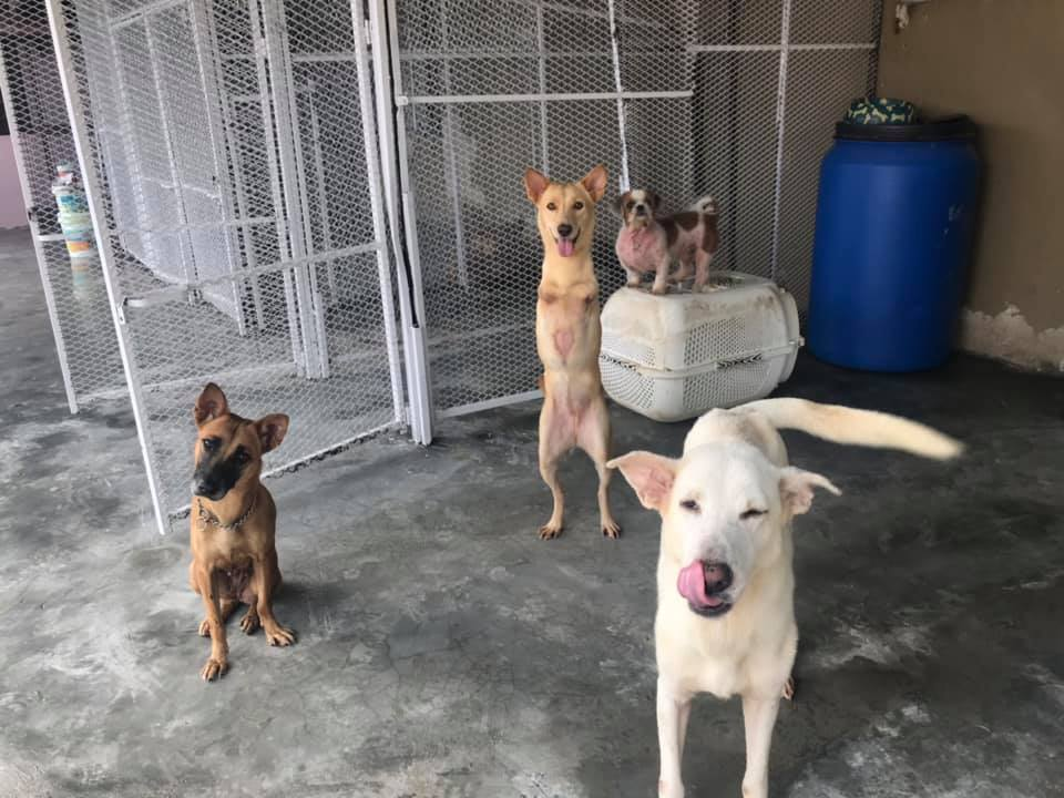 Volunteer with animals at S.I Shelter (3)