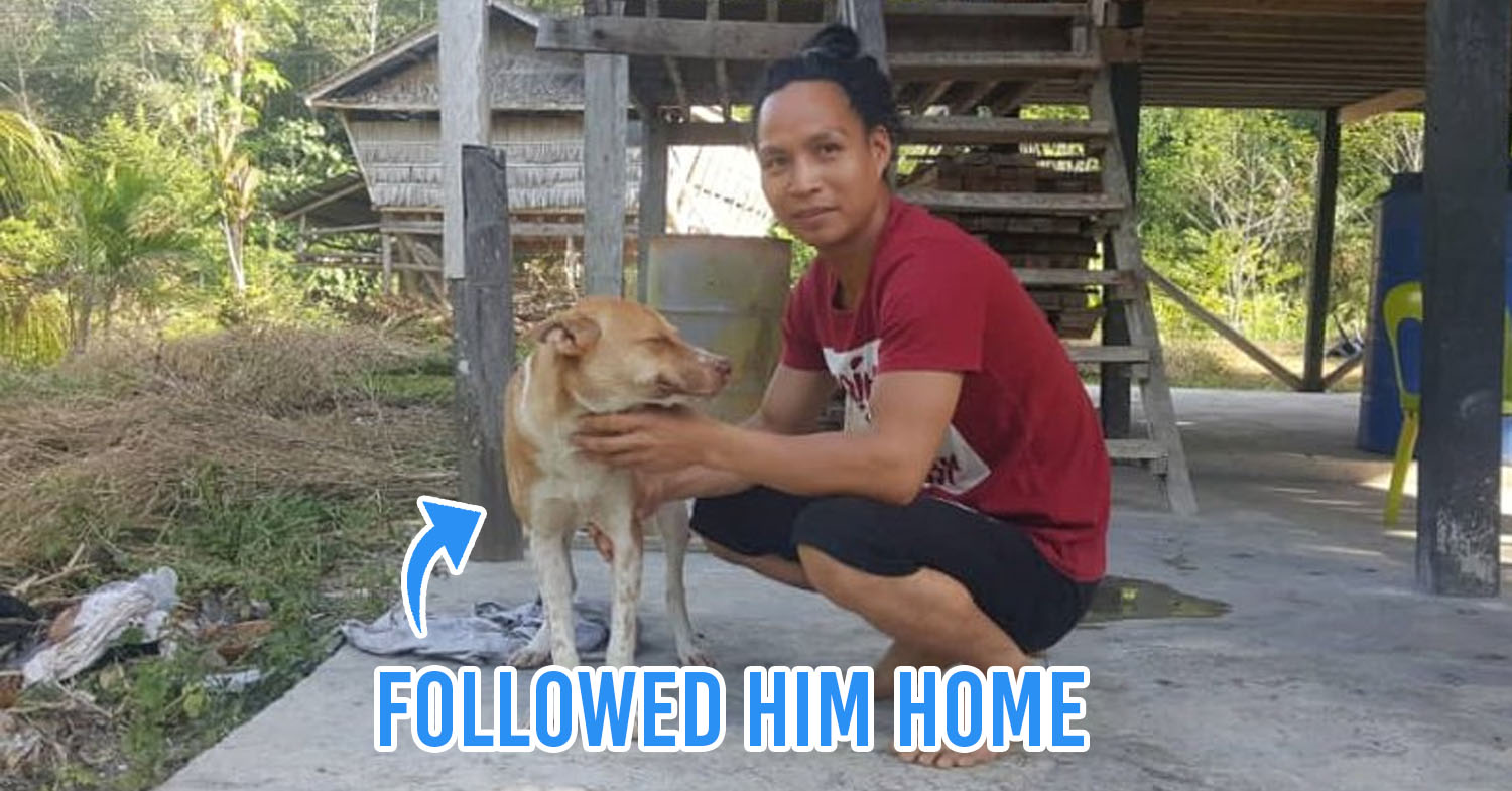 Man Walks 70KM To Get Home During MCO Lost Dog Joins Him