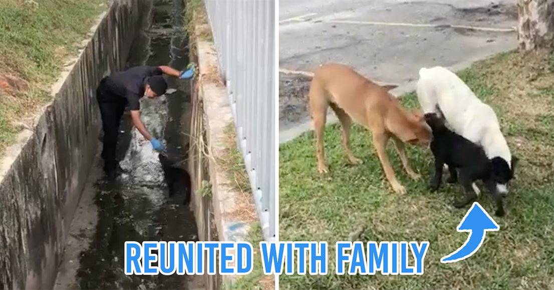 M'sian policeman rescues stray dog