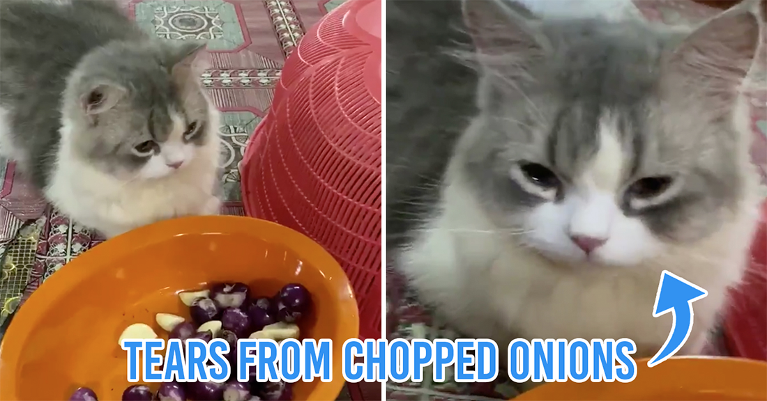 Viral M'sian cat cries over chopped onions