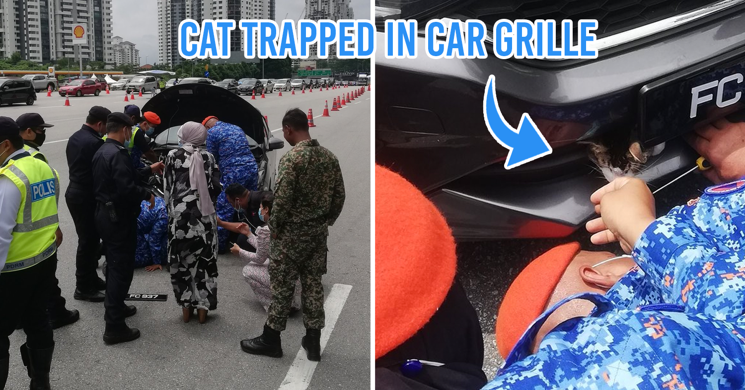 Cat Found  Illegally Travelling  In Car Bumper ; Msian Police , APM & PLUS Highway Authorities Stage Rescue Mission - TheSmartLocal Malaysia