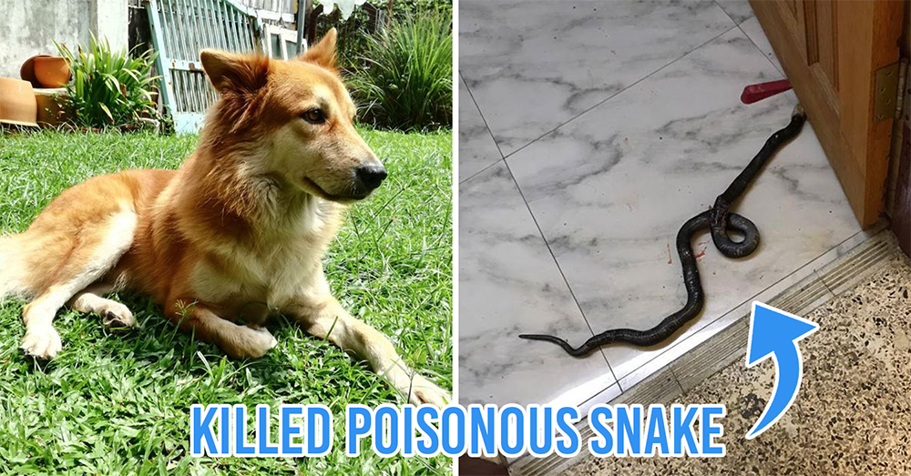 Dog sacrifices life to save family from poisonous snake
