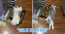 "M'sian Cats ""Pray"" Next To Their Owners, Some Even Have Mini Prayer Mats For Ramadan At Home"