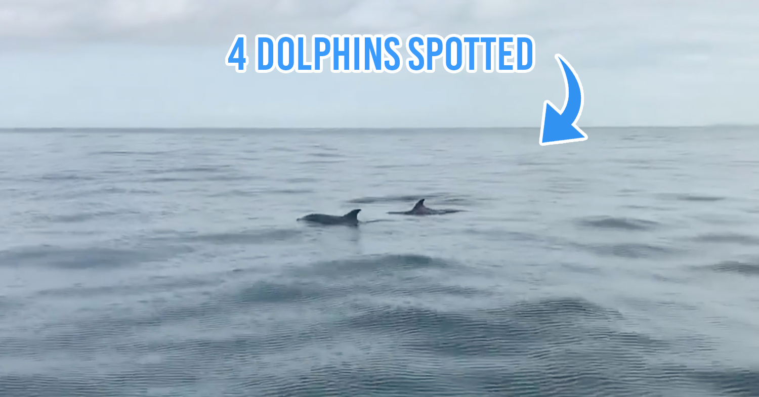 Dolphins spotted in Port Dickson