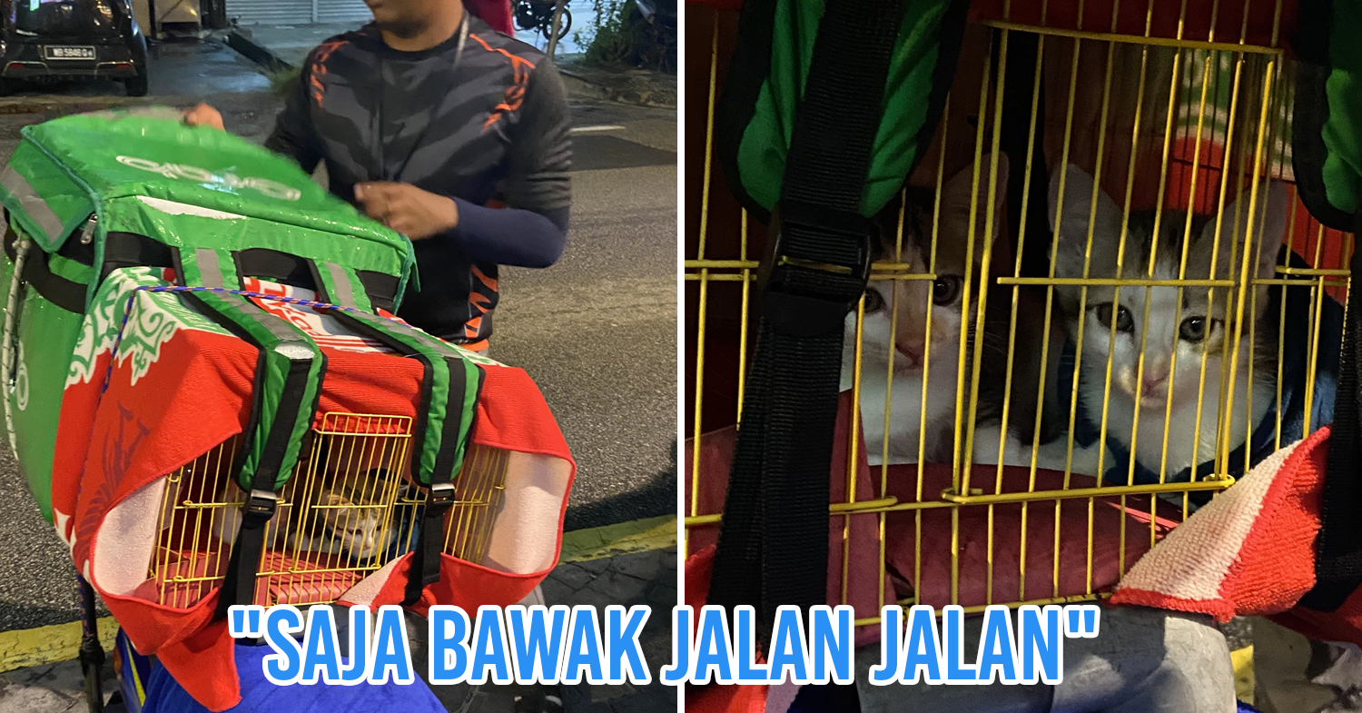 Malaysian GrabFood driver brings cats along for deliveries