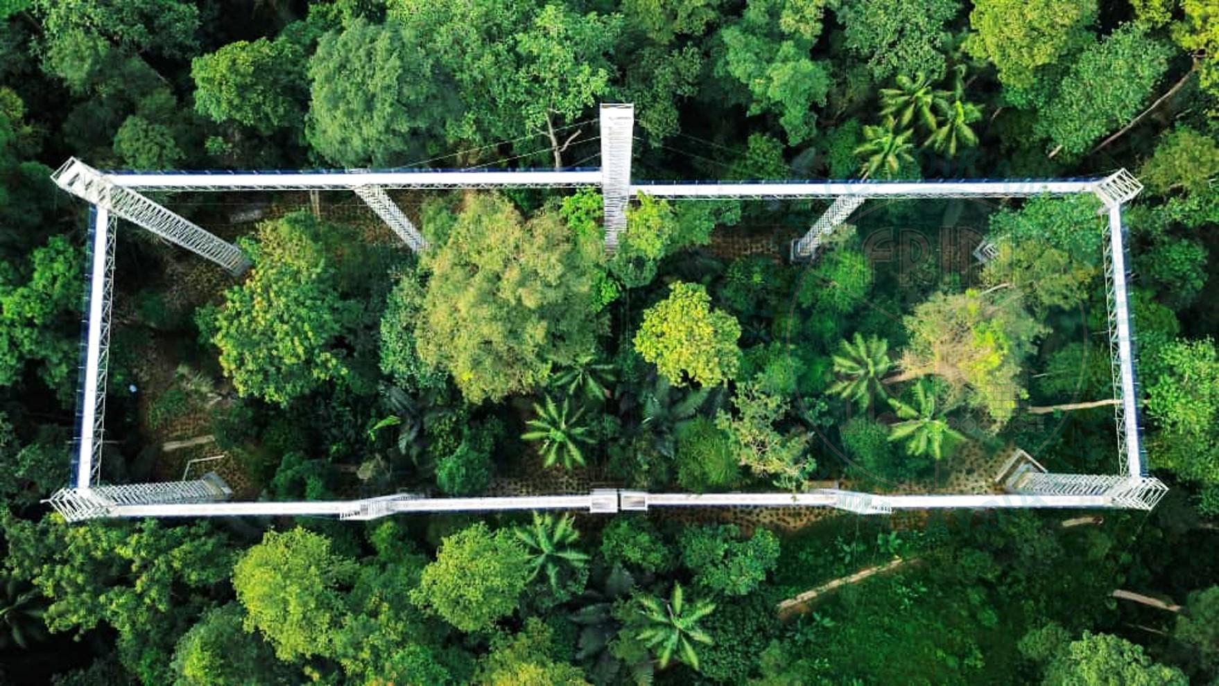 forest skywalk FRIM