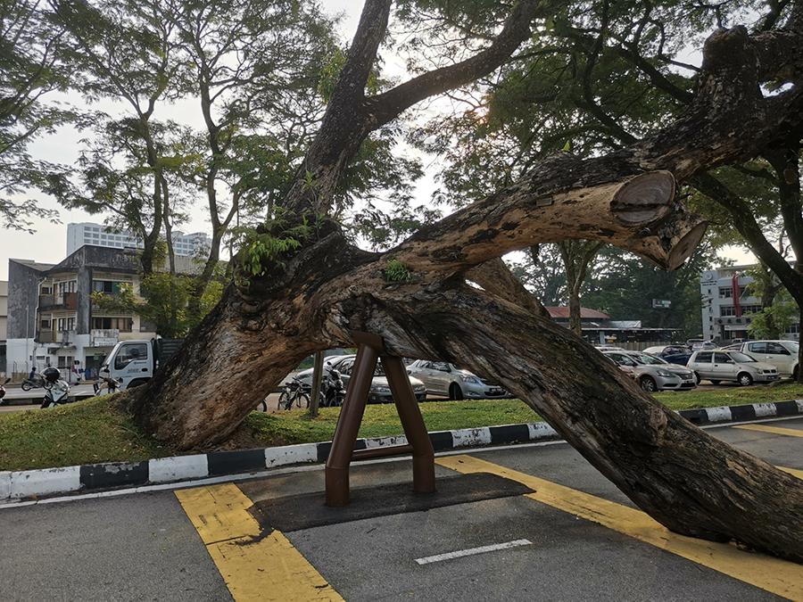 Slumping tree in Taiping, Perak