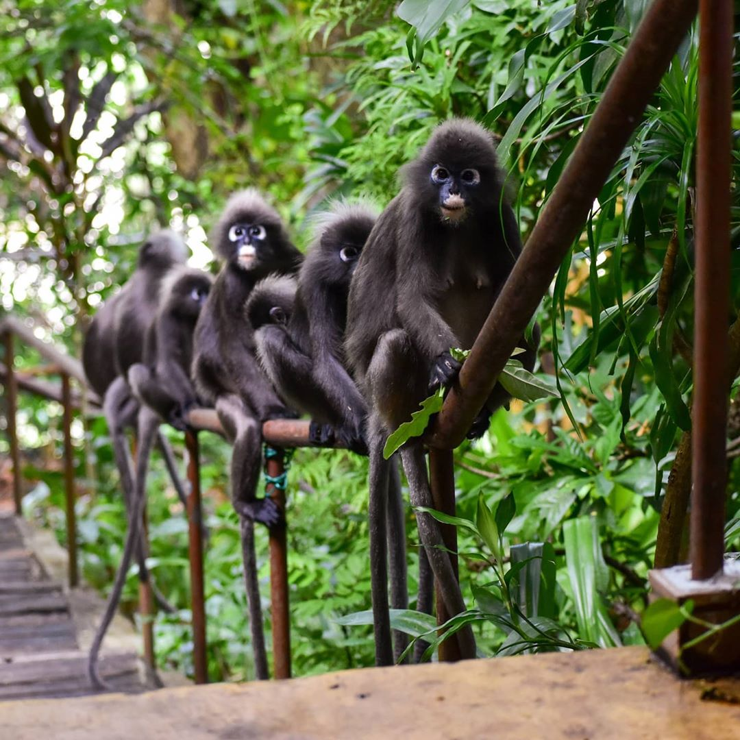 Penang Sunset Spots - Tree Monkey Restaurant back to nature dining