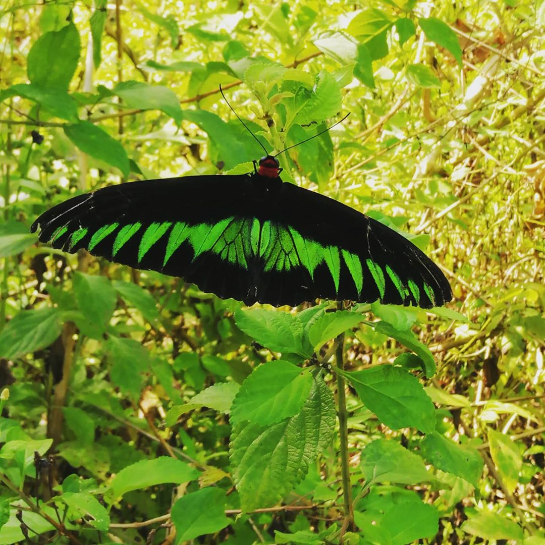 Penang Sunset Spots - The Habitat Penang Hill Butterfly Bank