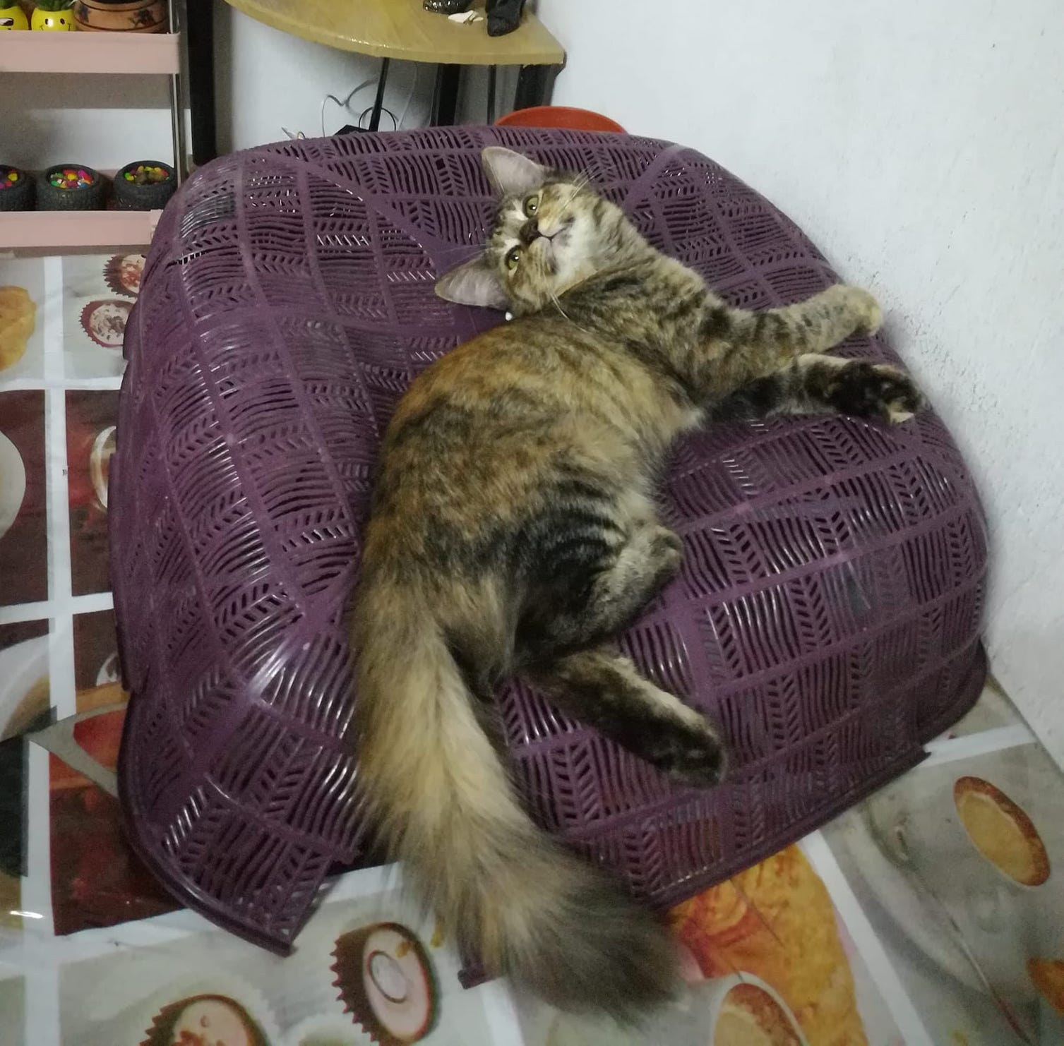 Unusual tip for nappy cats on food covers - problem