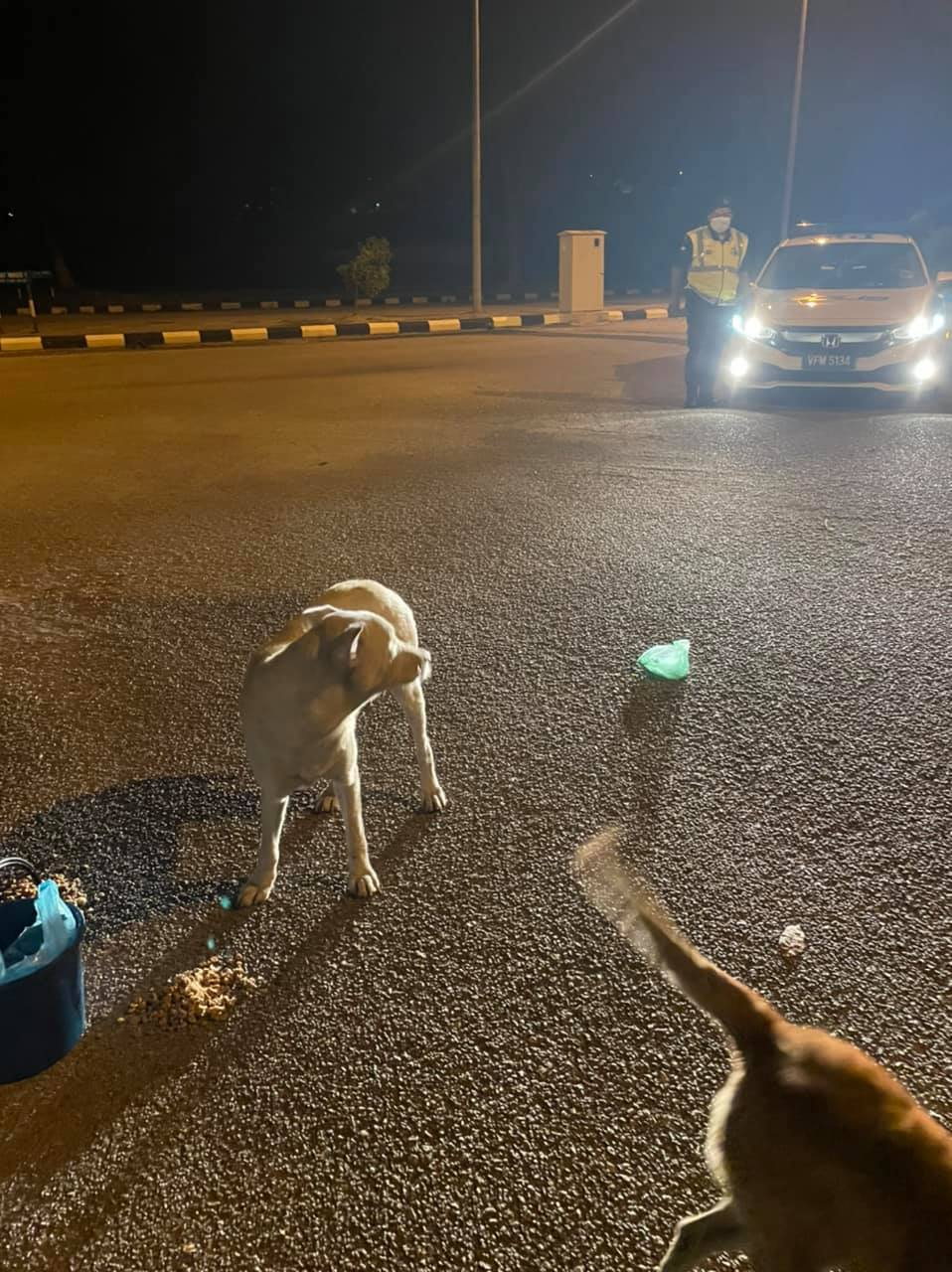 Woman feeding stray dogs gets the attention of police who teman her - feed