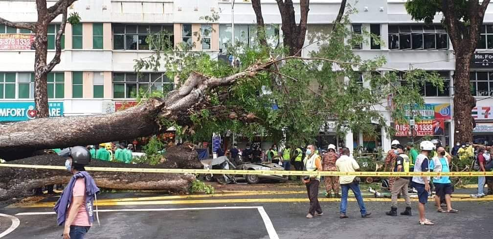 Uprooted tree in Penang causes tragic accident - car