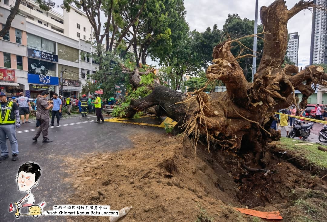 Uprooted tree in Penang causes tragic accident - tree