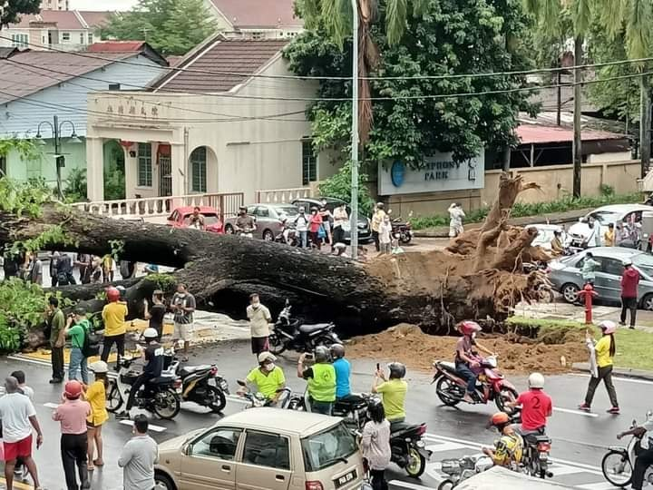 Uprooted tree in Penang causes tragic accident - uprooted