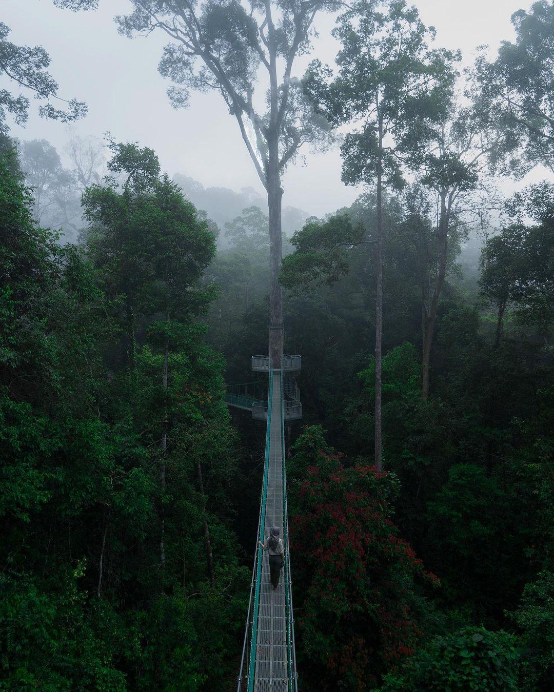 Backpacking in Sabah - Danum Valley