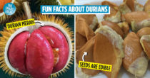 10 Durian Facts You Should Know To Call Yourself A Connoisseur Of The King Of Fruits