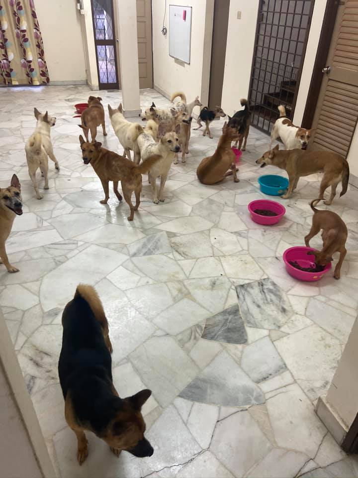 Rescued stray dogs at a shelter