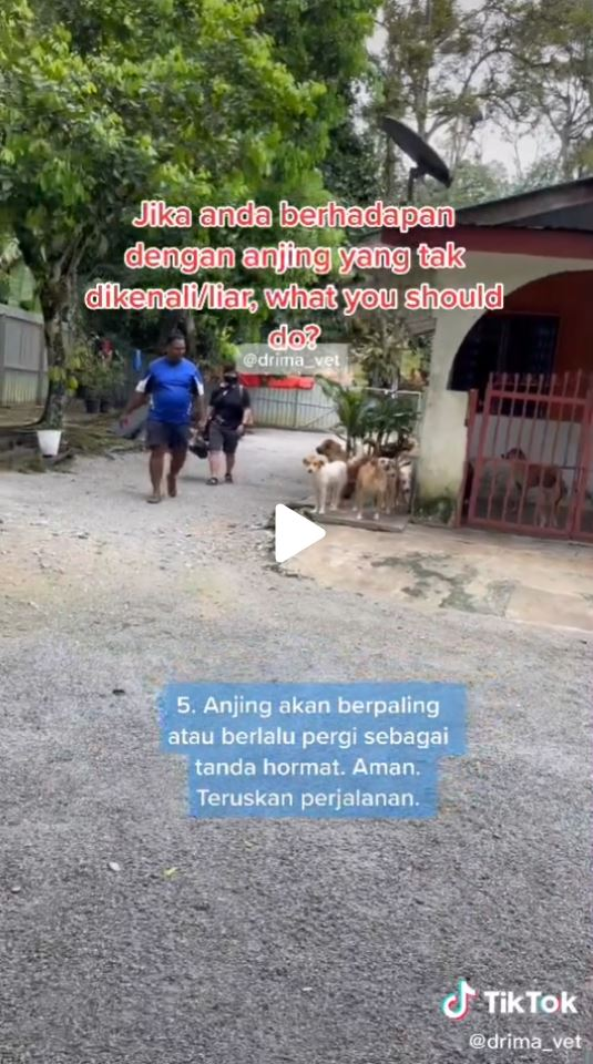 Malaysian animal doctor Ima shares tips on how to deal with stray dogs