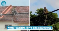 Monkey With 'Abducted' Puppy On Utility Lines Goes Viral, M'sians Stage Rescue Mission After 3-day Ordeal