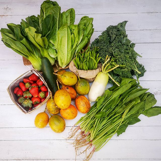 Session Groceries' variety of fruits and vegetables