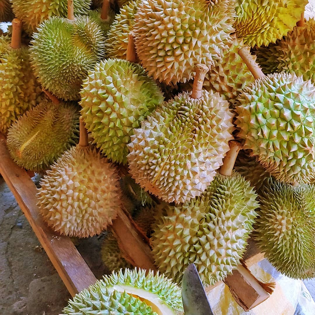 durians in davao