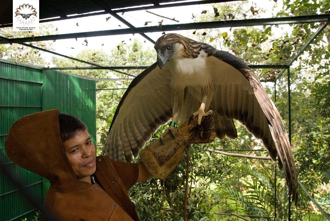 philippine eagle at the philippine eagle center